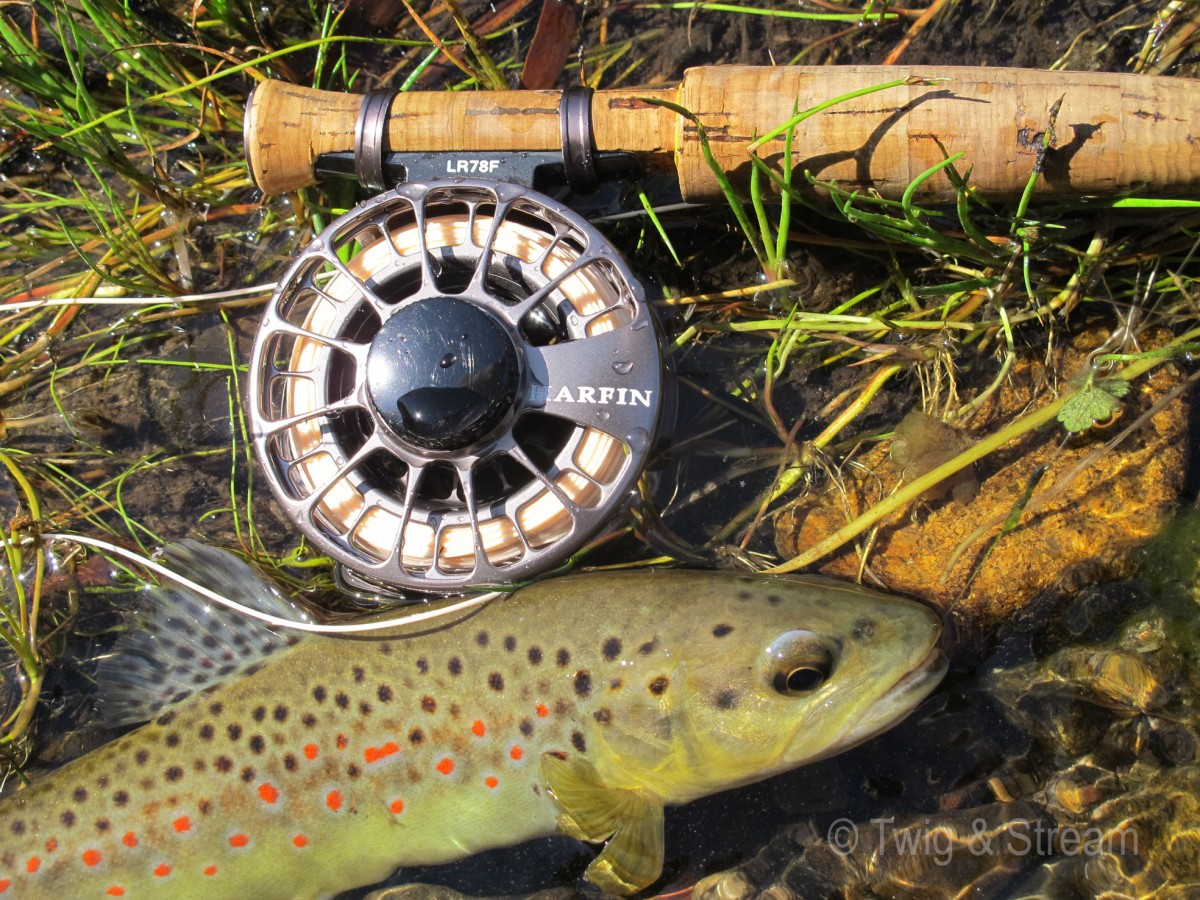 Image of a Wild Brownt Trout lying in the edge of the water next to a fly rod and reel. Caugnt near Melbourne, Australia. Fly Fishing