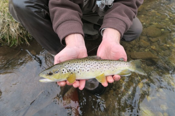 Catching trout on the fly