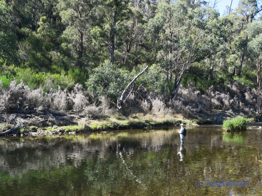 Woman fly fishing for trout in Victoria Australia