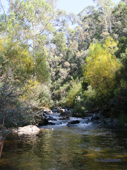 A High Country Trout Stream , Victoria Australia