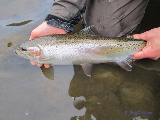 A nice trout to get on the board