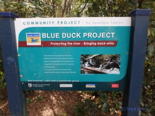 Blue Duck Project Sign